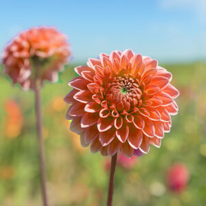 Flower region